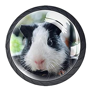 guinea pig muzzle