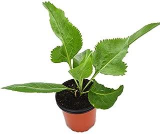 Amazon.es: 3 estrellas y más - Plantas de exterior / Plantas ...