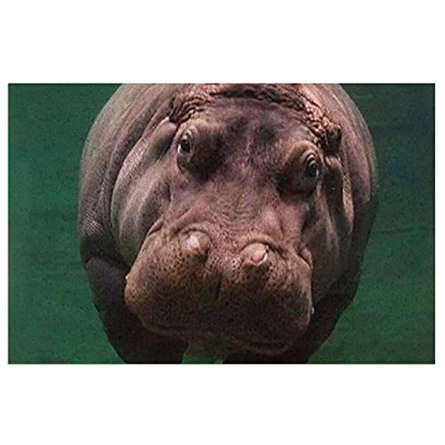 FFLSDR Felpudo Felpudo de Buceo hipopótamo Alfombrillas de Entrada Alfombrilla de PVC Alfombra de Cocina Lavable Alfombra de Bienvenida Alfombra de Bienvenida 40X60CM
