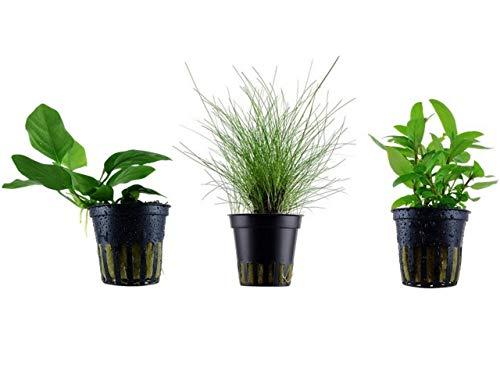 Tropica Nano Set mit 3 einfachen kleinen Topf Pflanzen Aquariumpflanzenset Nr.7 Wasserpflanzen Aquarium Aquariumpflanzen