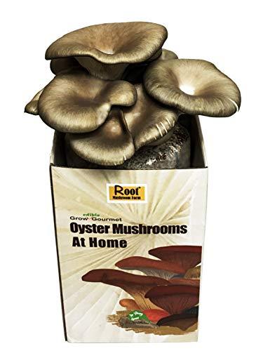 Root Mushroom Farm— Oyster Mushroom-All in one Gourmet Mushroom Growing kit(Packaging May Vary)