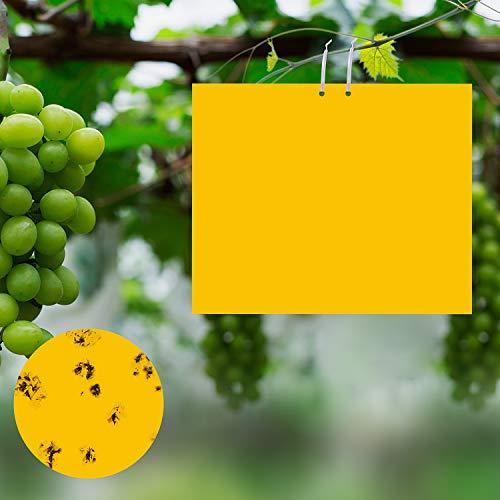 Ulikey 30 Pcs Trampas de Insectos de Doble Cara, Trampas Adhesivas de Doble Cara, Amarillo de Doble Cara, 20 x 25 cm, para Moscas, Polillas, Piojos, Áfidos etc