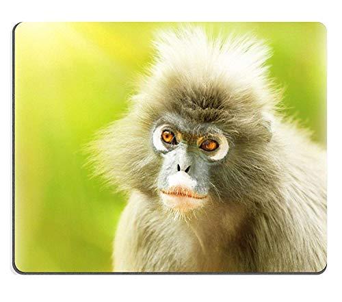 Mousepads Dusky Leaf Monkey Nahaufnahme Porträt eines niedlichen Affengesichtes Tiere Umwelt Langur in der wilden Natur Wildlife Safari Reise Monkeyland Südafrika