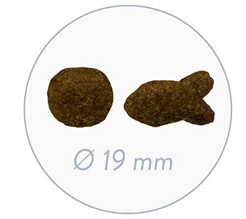 bosch Hundefutter Adult Fisch &  Kartoffel 1 kg, 5er Pack (5 x 1 kg) - 3