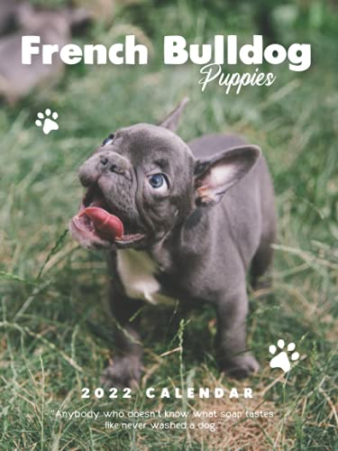 French Bulldog Puppies 2022 Calendar: 12-month Calendar - Gorgeous Mini Calendar 6x8' for planners with large grid for note