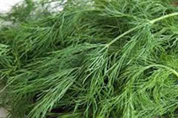 VISA STORE Semillas de eneldo, Bouquet, herencia, orgánico, no GMO, 25+ SEMILLAS,...