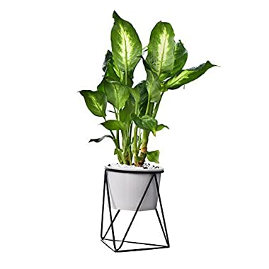 Feiren Outdoor/Indoor Planter Pots/Candle Stand/Indoor 6 inch Modern Garden White Ceramic Round Bowl with Metal Air Plant Stand for Succulent Planter -Perfect for Fig Tree Ficus (White + Black)
