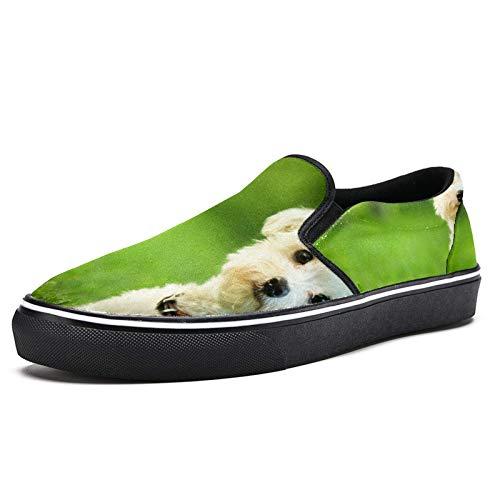 Zapatillas de correr para las mujeres Maltés perro blanco en pastizales de moda zapatillas de deporte de malla transpirable caminando senderismo zapatos de tenis, color Multicolor, talla 38.5 EU