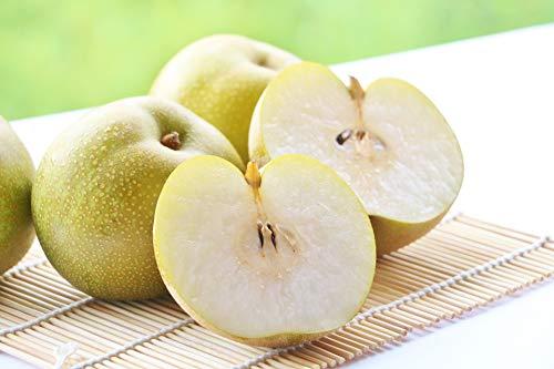 梨 静岡県産 佐賀県産 鳥取県産 高級 幸水梨 果実の知識を持ち合わせた野菜ソムリエが旬な時期に合わせて産地を選別,選定致します。 等級 赤秀 高糖度 ※野菜ソムリエ推奨 (約300g×6個入り)