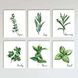 Kitchen Herbs Art Print 6 Piece Set, Contemporary Farmhouse Kitchen Decor and Home Wall Décor, Chef and Kitchen Art Posters, 6 prints total, Boho Style, 8x10 inches each, Unframed