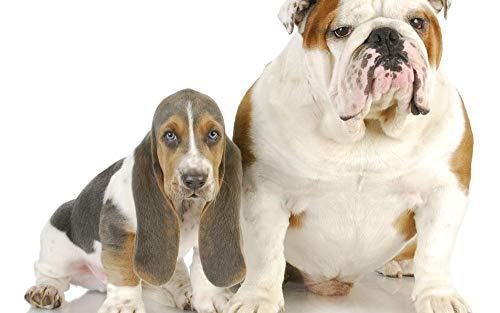 XIAOZHANG 5D Diamant Voller Runder Bohrer Eleganter Hund Stickerei Painting Für Anfänger Decor Gift 45X60Cm