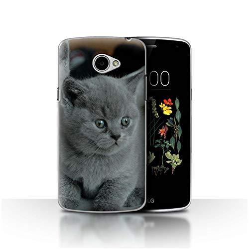 Hülle Für LG K5/X220 Süß Baby Tier Fotos Graues Kätzchen Katze Design Transparent Ultra Dünn Klar Hart Schutz Handyhülle Case