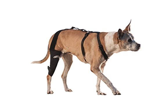 WalkAbout Canine Knee Brace (XXSmall 4.5-5.5' Circumference 1' Above Knee of Left Leg) 3mm Neoprene Support Sleeve