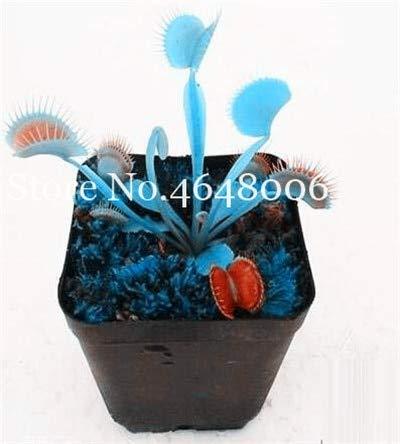 AGROBITS 300 pièces rayées Nepenthes Bonsai, Manger Mosquito Enchanteresse Carnivorous Pitcher CatchGarden Pot de fleurs: v