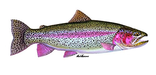 Enjoy It Wild Wings Rainbow Trout Full Color Car Sticker, Outdoor Rated Vinyl Sticker Decal