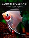 VARIETIES OF ANGELFISH: Different Types of...
