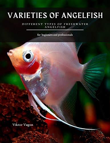 angelfish baby food - 2