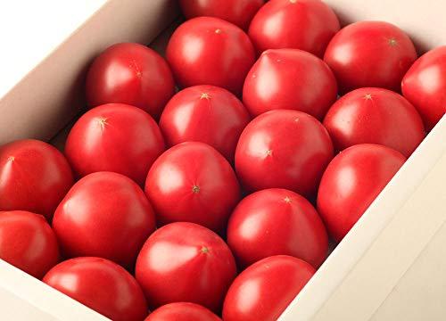 おかざき農園リサ・フルーツトマト『リサ・フルーツトマト1kg』