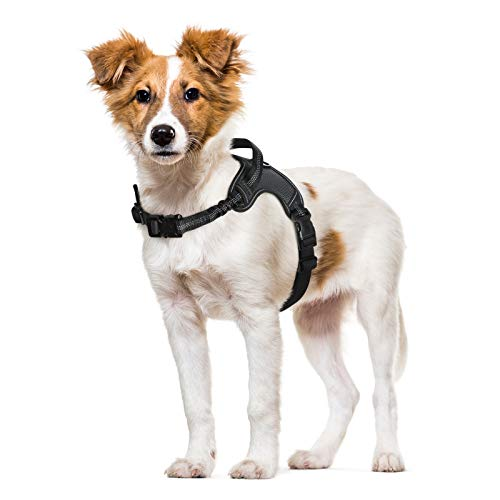 rabbitgoo Dog Harness, Adjustable Dog Walking Harness with Handle and Shock-Absorbing Bungee Straps, Reflective Dog Vest Harness No Choke, Halter Harness with Padded Strap for Medium Dogs (Black,M)