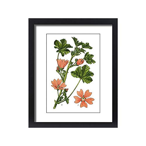 Media Storehouse Framed 20x16 Print of Common Mallow, Cheeses, high Mallow, Tall Mallow (19674151)
