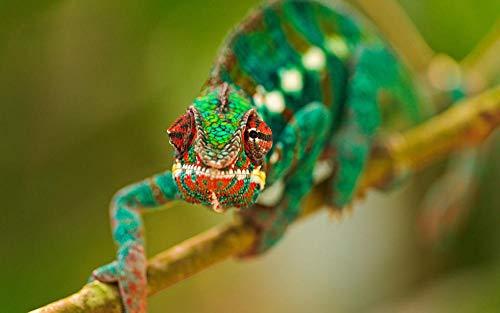 Lsping Puzzle Personalizzato con Foto - Idea Regalo - 1000 pezzi Animales Reptiles 50x70cm