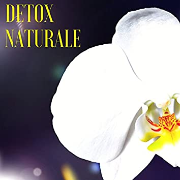 Detox Naturale - Musiche Giapponesi per Sottofondo Musicale, Pace e Benessere Interiore