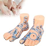 ZJchao Acupuncture Foot Model, 13cm Professional Feet Acupoint Massage Zone Teaching Mannequin Tool for Human Acupoint Pressure Point and Meridians Educational Train