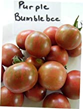 HNM 10 Seeds Purple Bumblebee Tomato Seeds - LY710