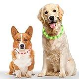 Leuchthalsband Hund 2 Stück, Vegena LED Hundehalsband Leuchtend Längenverstellbarer Wiederaufladbare USB Hunde Halsband für Kleine Mittlere Große Hunde Katzen mit 3 Modus 12 Lichte, Grün Rot