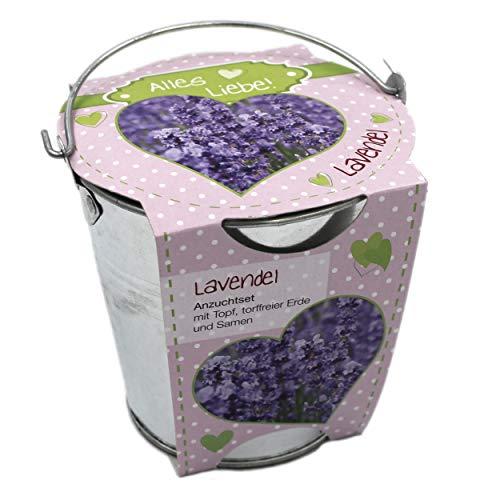 Pflanz-Topf als Geschenk, Lavendel, Alles Liebe, 11x11cm, Anzucht-Set mit Metall-Topf Erde Samen für Balkon Garten Wohnung