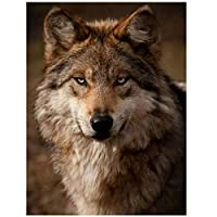 JXRDG ナンバーキットによるDIY5Dダイヤモンド絵画オオカミの頭のパターン、家の装飾ギフトのためのフルスクエアドリルダイヤモンドモザイクパズルアートクラフト40x50cmフレームなし