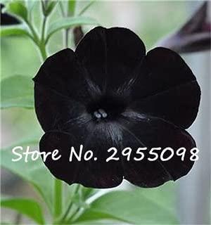 20 Seeds Petunia Kabloom Calibrachoa, mixed bonsai flower seeds, Morning Glory, Pot Plant For Home Garden 12