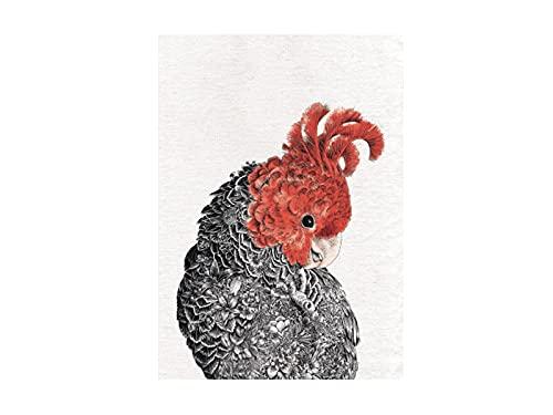 Maxwell & Williams GX0100 Marini Ferlazzo Birds - Strofinaccio stampato con Gang Gang Gang, 100% cotone, nero/bianco, 50 x 70 cm