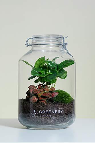 Flaschengarten Jar-5 DIY-Set/Terrarium/Biotop/Ökosystem (5 Liter): stilvolles Wohnaccessoire mit echten Pflanzen, ideal als Geschenk