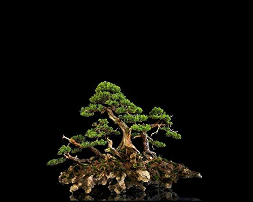 Holzpuzzle Puzzles FüR Erwachsene 1000 StüCk Puzzle Baum Bonsai PäDagogisch Intellektuell Dekomprimieren Spielzeug Puzzles Fun Familienspiel FüR Kinder Erwachsene