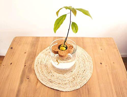 Kit cultivo de corcho para aguacate | Da vida a tu aguacate | Jardinería en tu hogar | Decoración botánica del hogar | Regalo original de corcho ecológico | Plastic free