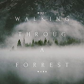 Walking Through A Forrest