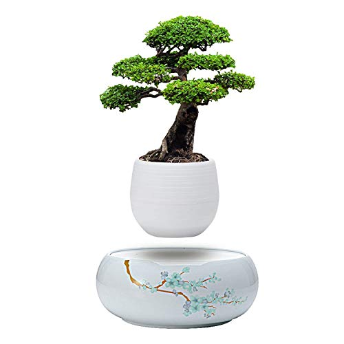 Active Gear Guy Levitating Mini Plant Pot with Japanese Style Design for Flowers Or Bonsai. Magnetic Levitation Creates A Beautiful Floating Display. Does NOT Come with a Plant.