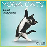 Yoga Cats 12 MONTH CALENDAR 2022: 8.5 x 8.5 Inch Monthly Square Calendar, Animals Humor Cat