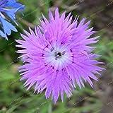 。色とりどりのカーネーション植物Barbatus工場花工場バルコニーの植物簡単には100個の成長に/バッグ:14