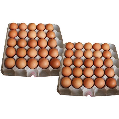 イヨエッグ 人生これか卵 50個 詰合せ 卵 愛媛県産 常温 鶏卵 たまご 国産 愛媛