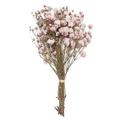 YUNGLI 1 Bouquet Mini Fleurs conservées séchées fraîches Naturelles Vraies Fleurs sèches pour la décoration de la Maison(Pink)