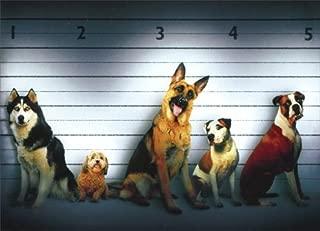 Dog Line Up Funny German Shepherd, Boxer & Husky Birthday Card