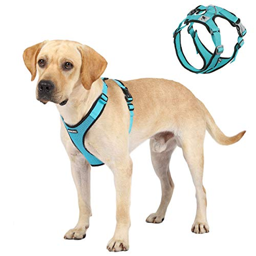 ACKERPET Soft Dog Vest Harness No Pull Small Pet Vest Harnesses with Mesh Padded Reflective Adjustable Pet Vest Easy Control Step-in Pet Harnesse or Puppy Small Medium Dogs (XL,Turquoise)