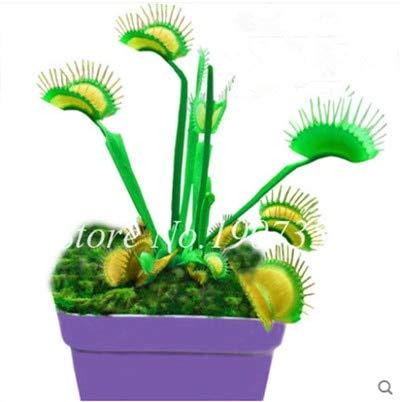 Shopmeeko Graines: Bonsai 100 Pcs/Sac Moucherolle Rare Rillettes Mixte insectivores Bonsai Plante Dionaea géant clip Dionée bateau libre: 17