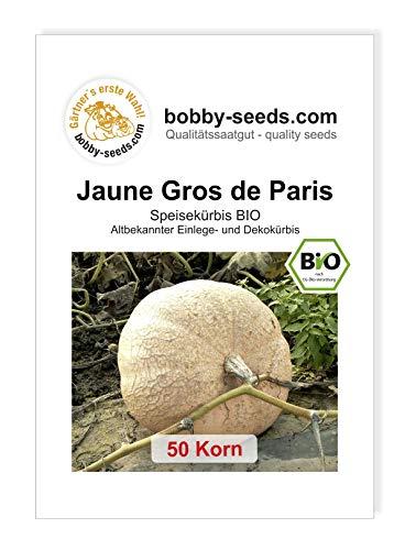 Jaune Gros -Gelber Zentner Bio Kürbissamen von Bobby-Seeds 50 Korn