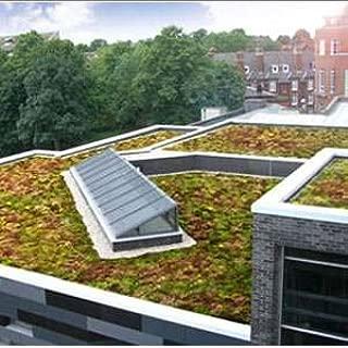 Outsidepride Sedum Roof Garden Ground Cover Plant Mix - 5000 Seeds