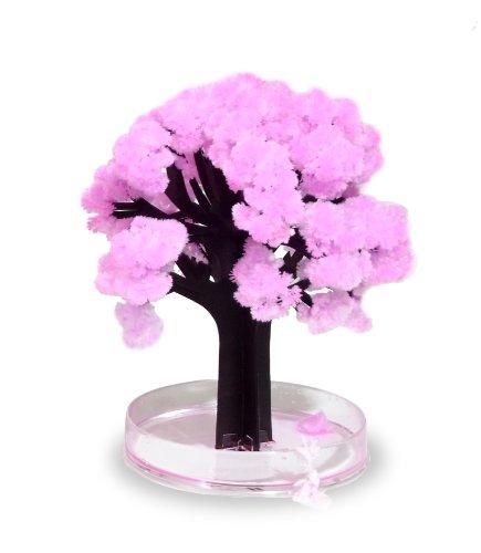 Thumbs Up Bonsaî Magic Sakura