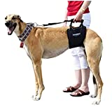 GingerLead Dog Support...image