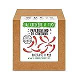 garden pocket - fai crescere il tuo peperoncino di cayenna- kit di germinazione